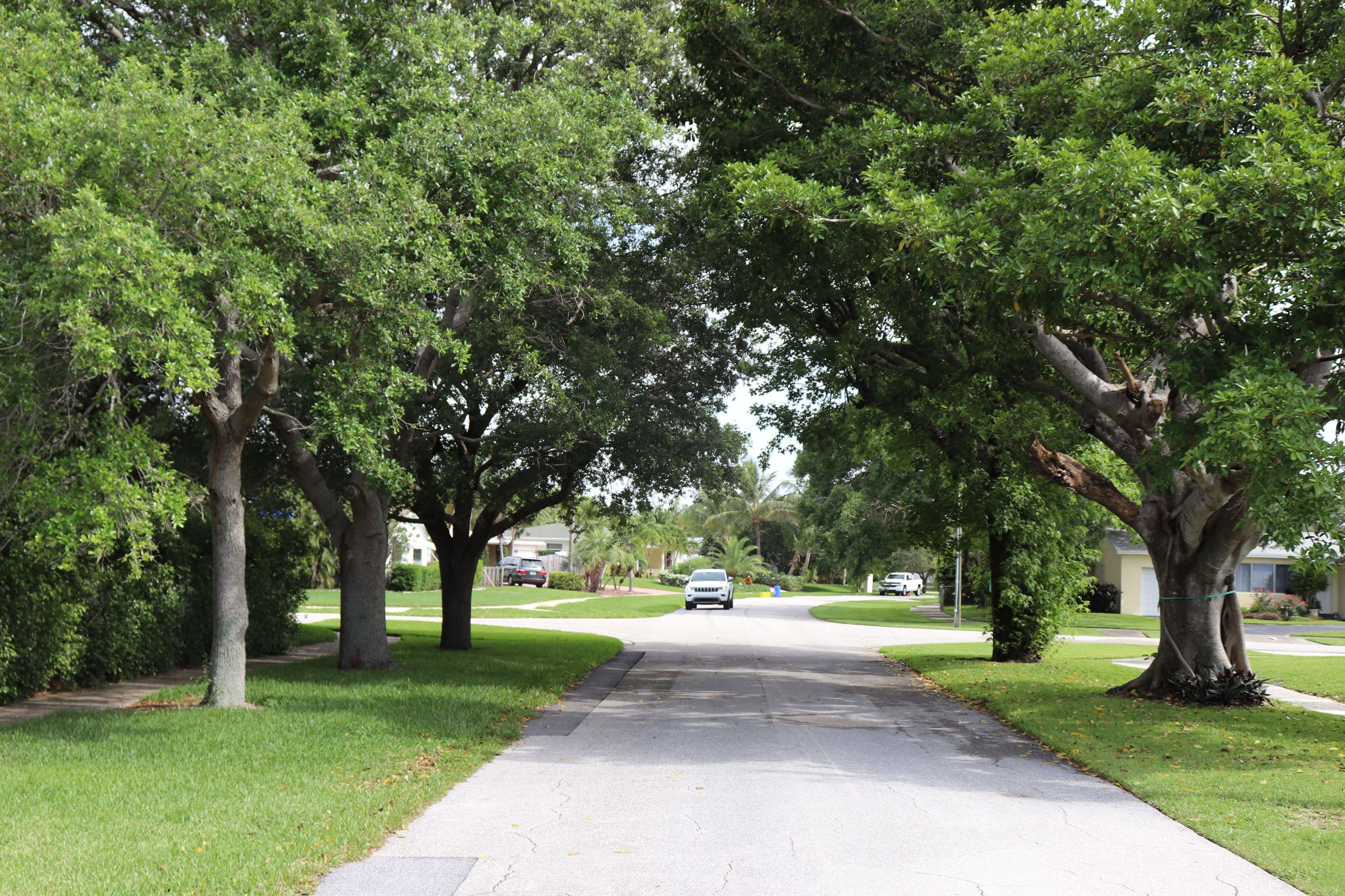 tree canopy over road